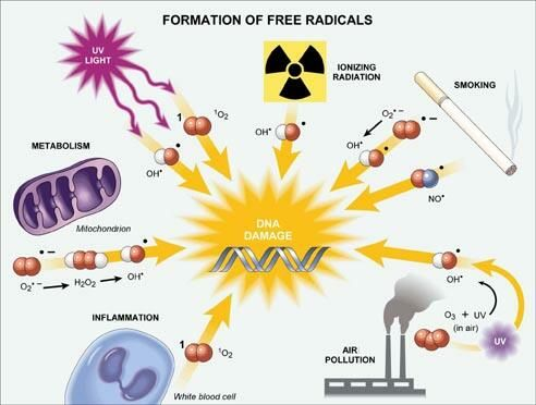 Antioxidants Free Radicals